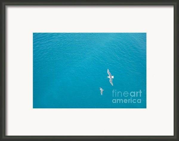Gliding Seagulls Framed Print By Jacqueline Athmann