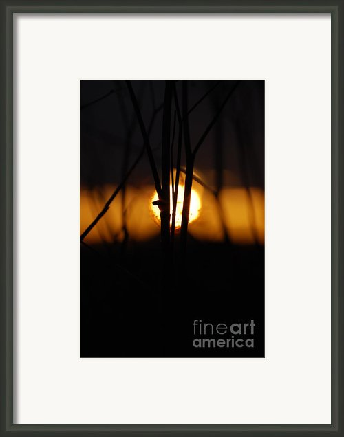 Glowing Lace Framed Print By Jani Freimann