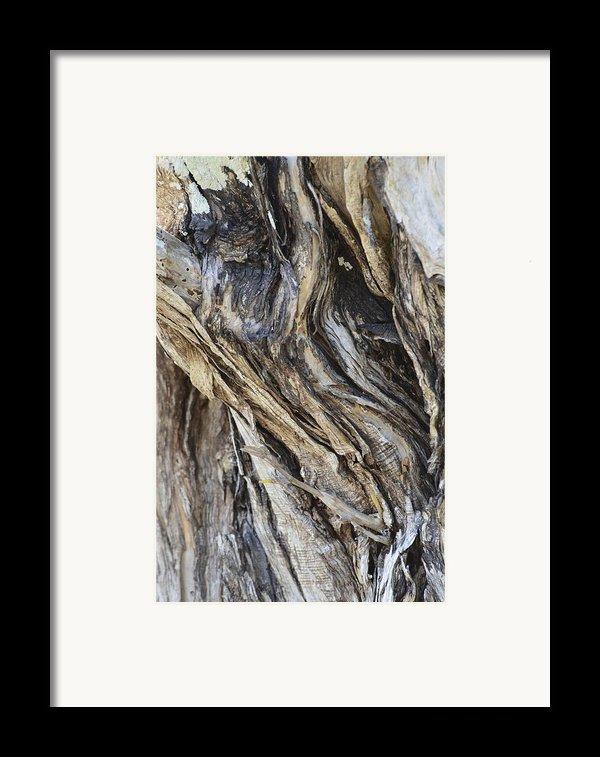Gnarly Framed Print By Annajo Vahle