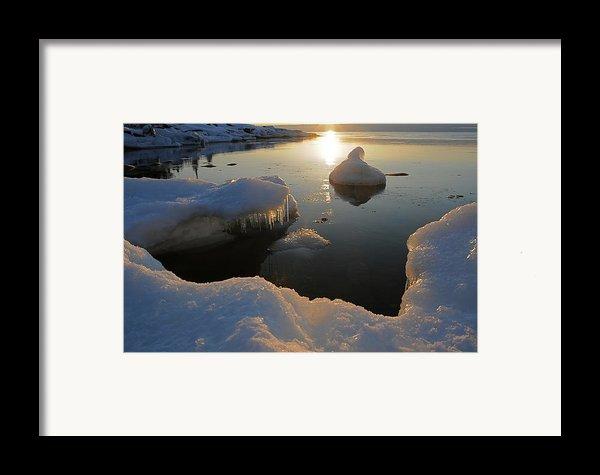 Golden Glow Framed Print By Sandra Updyke