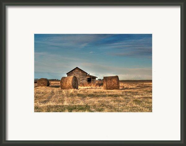Golden Hay Framed Print By Lisa Knechtel