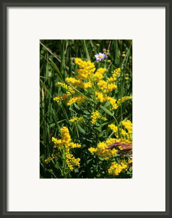 Golden October Framed Print By Christine Till