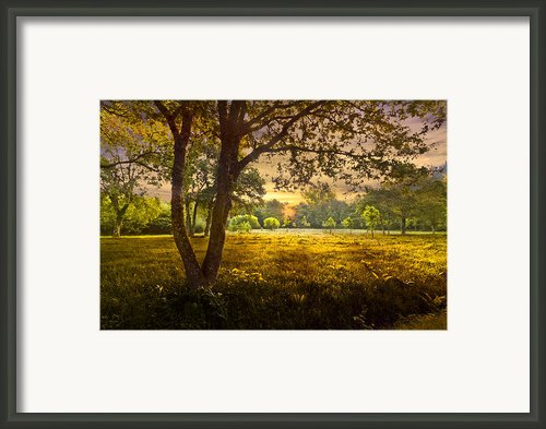 Golden Pastures Framed Print By Debra And Dave Vanderlaan