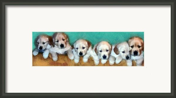 Golden Puppies Framed Print By Michelle Calkins
