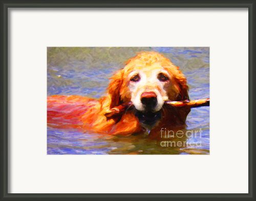 Golden Retriever - Painterly Framed Print By Wingsdomain Art And Photography
