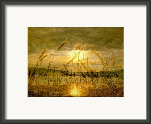 Golden Sunset Framed Print By Barbara St Jean