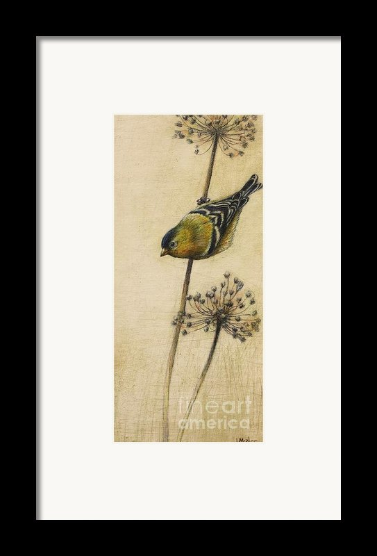 Goldfinch Framed Print By Lori  Mcnee