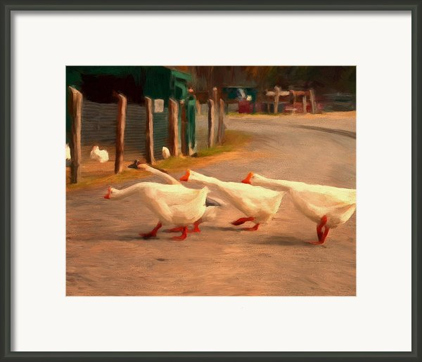 Goose Crossing Framed Print By Michael Pickett