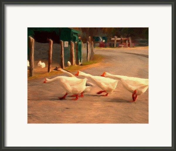 Goose Crossing Framed Print By Michael Pickett