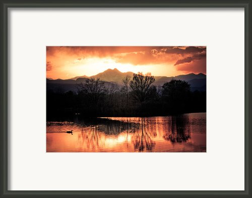 Goose On Golden Ponds 1 Framed Print By James Bo Insogna