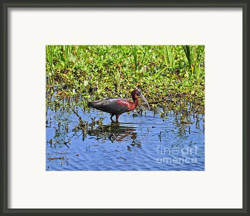 Gorgeous Glossy Framed Print By Al Powell Photography Usa