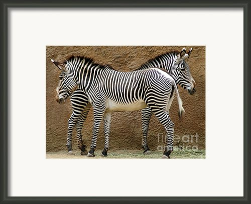 Got Your Back Framed Print By Dan Holm