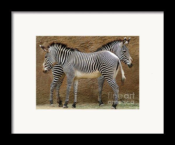 Got Your Back Framed Print By Dan Holm