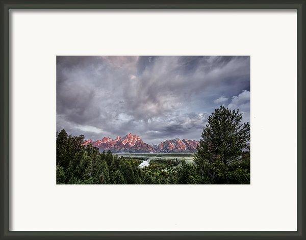 Grand Treeton Framed Print By Jon Glaser