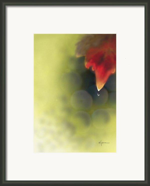 Grape Leaf Water Drop Framed Print By Kume Bryant