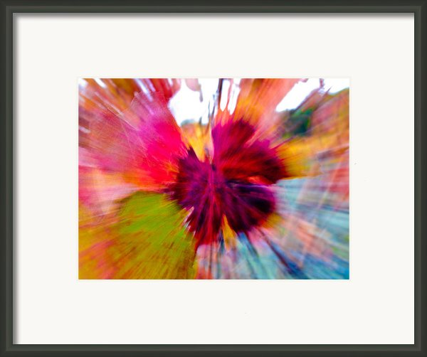 Grape Vine Burst Framed Print By Bill Gallagher