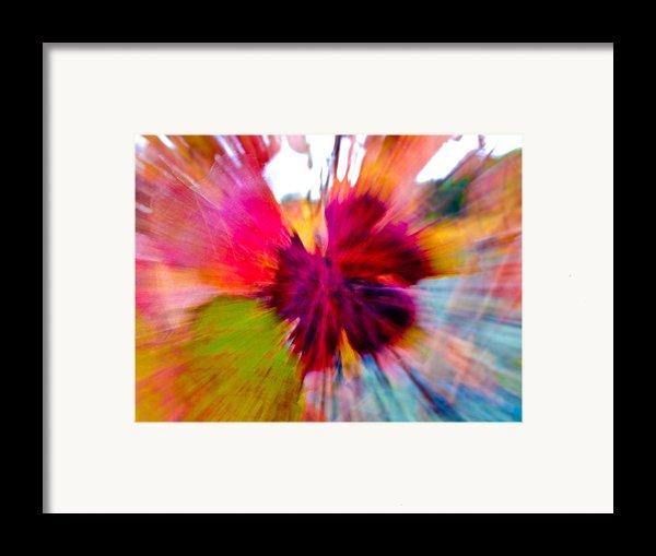 Grape Vine Burst Framed Print By Bill Gallagher