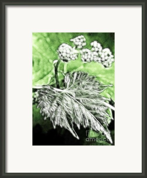 Grape Vine Leaf Framed Print By Odon Czintos