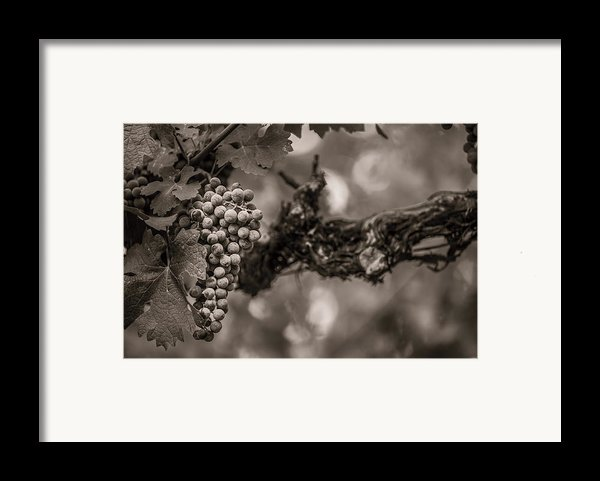 Grapes In Grey 1 Framed Print By Clint Brewer