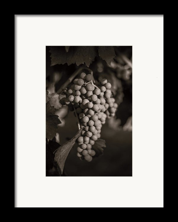 Grapes In Grey 2 Framed Print By Clint Brewer