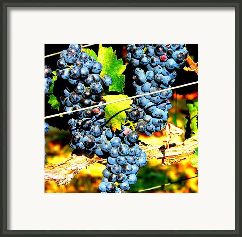 Grapes On The Vine Framed Print By Kay Gilley