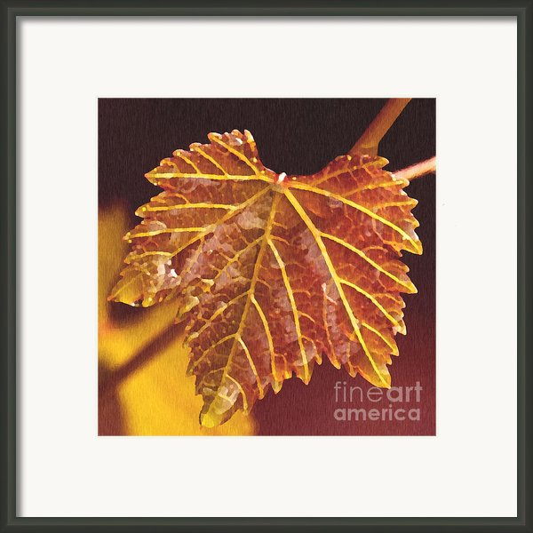 Grapevine In Fall Framed Print By Artist And Photographer Laura Wrede