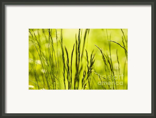 Grass Abstract Framed Print By Svetlana Sewell