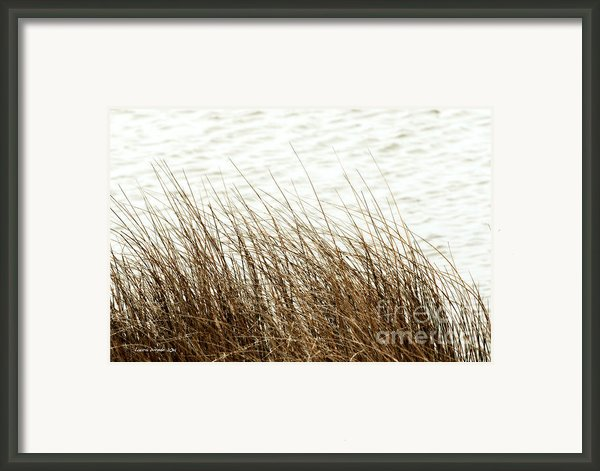 Grass Down By The Shore Of Virginia Beach Framed Print By Artist And Photographer Laura Wrede