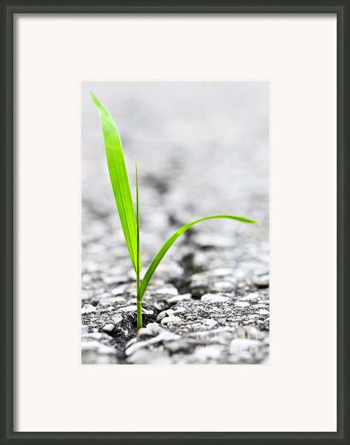 Grass Growing From Crack In Asphalt Framed Print By Elena Elisseeva