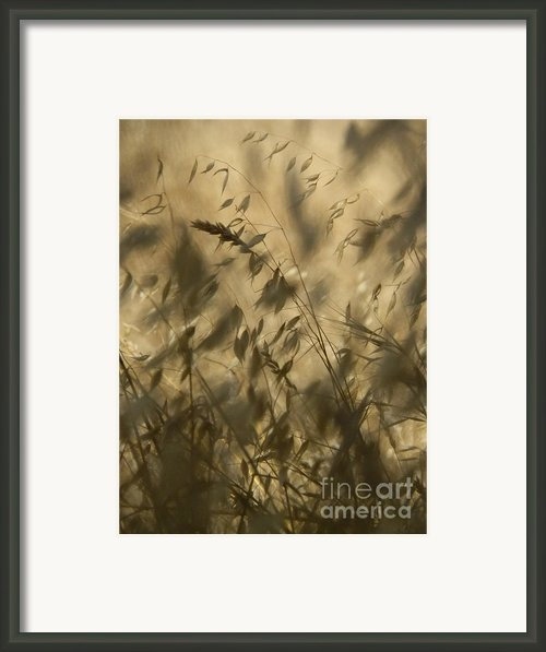 Grassland Framed Print By Robert Ball