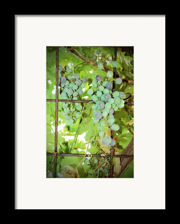Grated Grapes Framed Print By Holly Blunkall