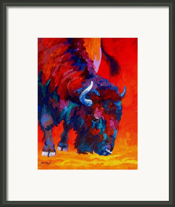 Grazing Bison Framed Print By Marion Rose