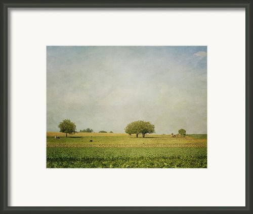 Grazing Framed Print By Kim Hojnacki