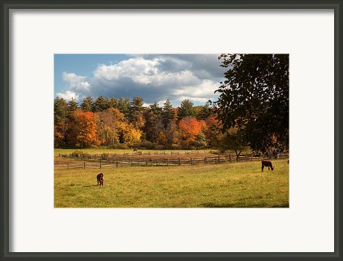 Grazing On The Farm Framed Print By Joann Vitali