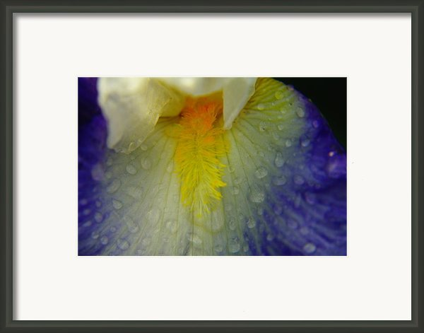 Great Beauty In Tiny Places Framed Print By Jeff  Swan