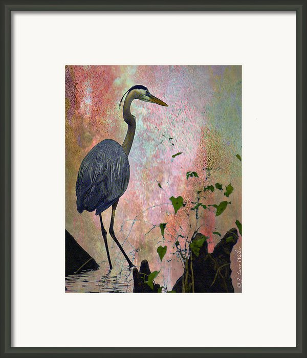 Great Blue Heron Among Cypress Knees Framed Print By J Larry Walker