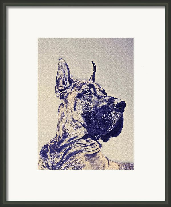 Great Dane- Blue Sketch Framed Print By Jane Schnetlage