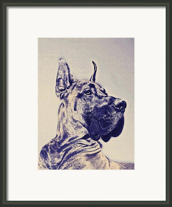 Great Dane- Blue Sketch Framed Print By Jane Schnetlage