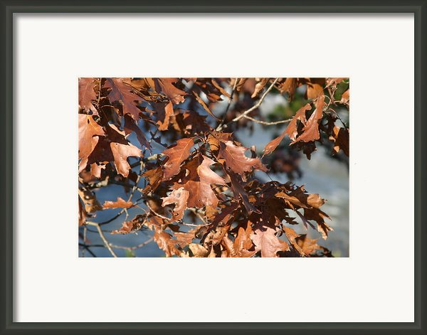 Great Falls Va - 121227 Framed Print By Dc Photographer