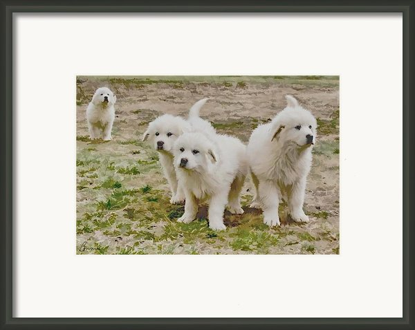 Great Pyranese Puppies Framed Print By Bonnie Willis