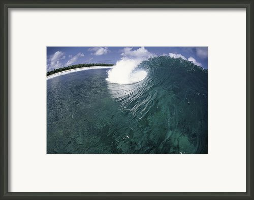 Green Curl Framed Print By Sean Davey