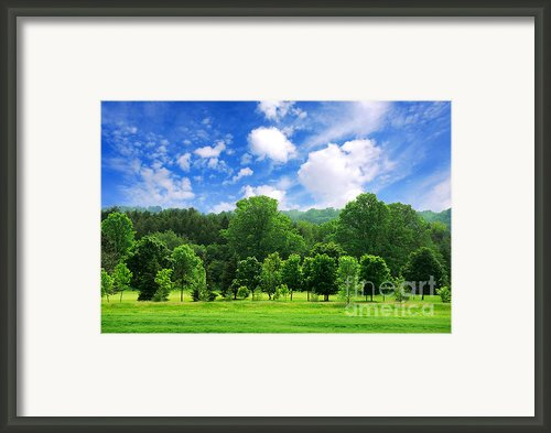 Green Forest Framed Print By Elena Elisseeva