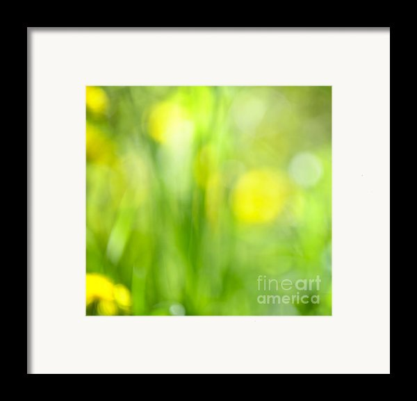 Green Grass With Yellow Flowers Abstract Framed Print By Elena Elisseeva