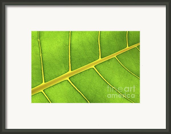 Green Leaf Close Up Framed Print By Elena Elisseeva