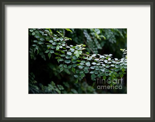 Greens Framed Print By Dan Holm