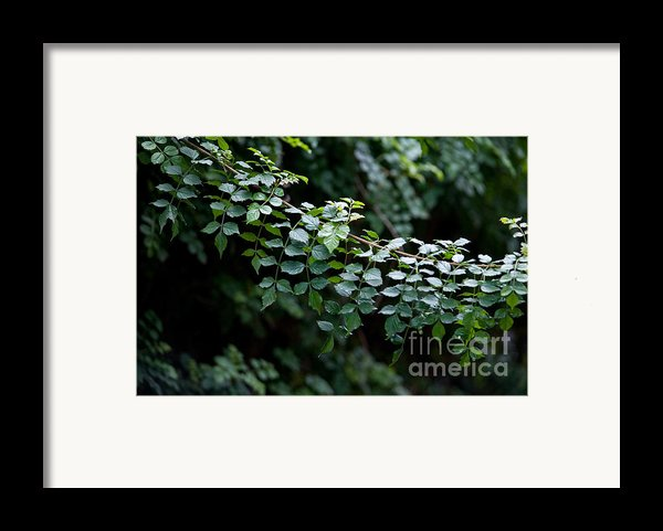 Greens Framed Print By Dan Holm