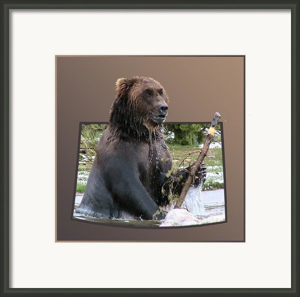 Grizzly Bear 6 Out Of Bounds Framed Print By Thomas Woolworth
