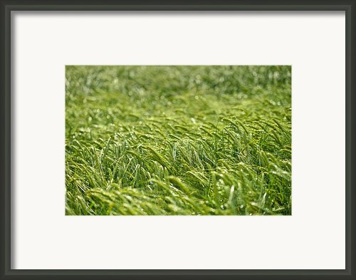 Growing Framed Print By Ivan Slosar
