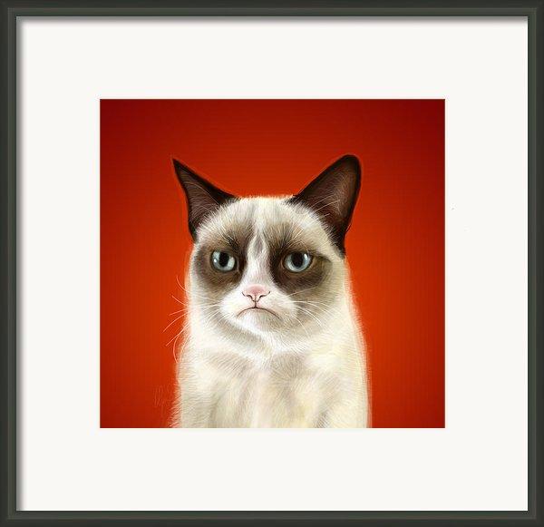 Grumpy Cat Framed Print By Olga Shvartsur
