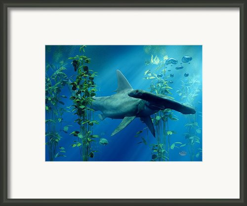 Hammerhead Framed Print By Daniel Eskridge